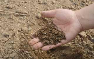 Как повысить кислотность почвы