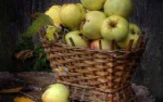 Какие на вкус яблоки антоновка