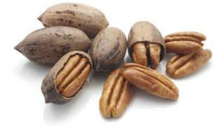 Дерево с плодами похожими на грецкий орех