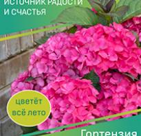 Как прикопать саженцы роз до весны