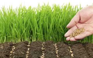Как сидераты заделать в почву