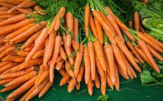 Можно ли морковь сажать под зиму