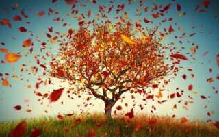 У каких растений листья опадают раньше