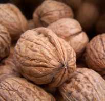 Как сушить орехи в домашних условиях