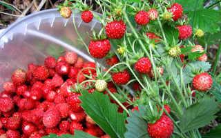 Как называется ягода похожая на шиповник