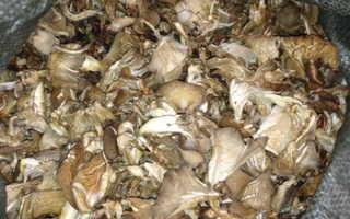 Можно ли сушить грибы вешенки