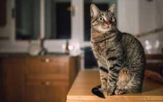 Чем можно отравить кошку