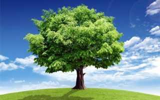 Какое дерево подходит по знаку зодиака