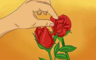 Как сохранить лепестки роз свежими в домашних условиях