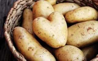 Сколько можно хранить вареный картофель в холодильнике