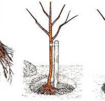 Какая нужна почва для вишни