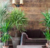 Какая нужна земля для пальмы