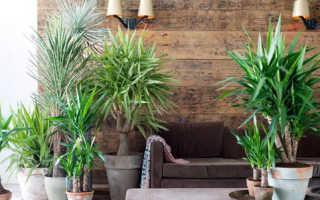 Какая земля нужна для пальмы в домашних условиях