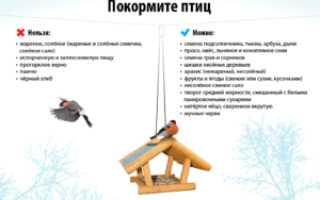 Что можно насыпать в кормушку для птиц