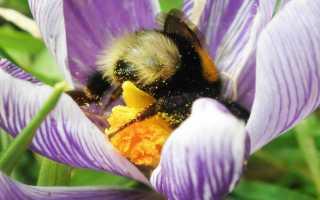 Какие насекомые опыляют цветы