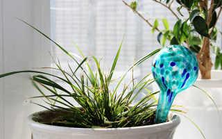 Как оставить цветы без полива на 2 недели