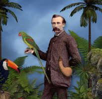 Как называется наука о птицах