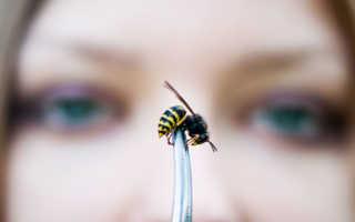 Как отравить соседских пчел