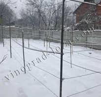 Как виноград прикопать на зиму