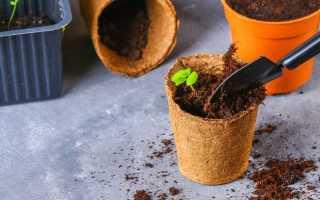 Как вырастить комнатные цветы из семян в домашних условиях