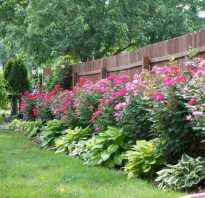 Как загородиться от соседей на даче