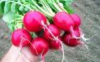 Салат из редиса на зиму пальчики оближешь