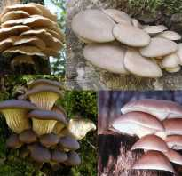 Какие грибы называют паразитами