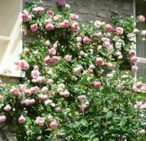Календарь ухода за розами на каждый месяц