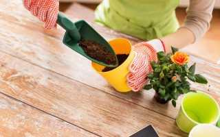 Как правильно сажать цветы в горшок