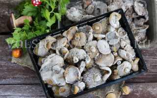 Можно ли заморозить грибы не отваривая свежими