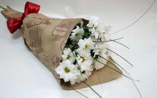 Как укоренить срезанную хризантему