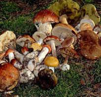 В соленых грибах мало рассола что делать