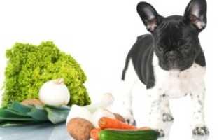 Можно ли собакам капусту цветную