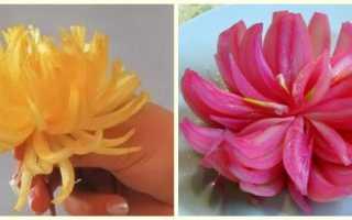 Цветок из луковицы как сделать