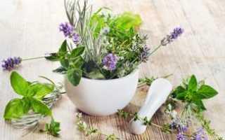 Сообщение о лечебных растениях для 4 класса