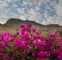 Какие растения растут в пустыне
