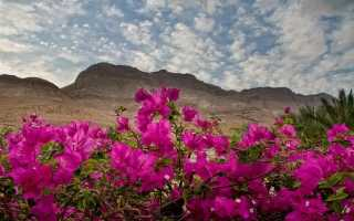 Что растет в пустыне какие растения