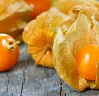 Как называется растение с оранжевыми фонариками