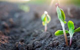 Тяжелая почва как сделать легкой