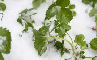 Нужно ли накрывать клубнику на зиму и чем
