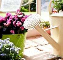 Как разводить дрожжи для подкормки растений