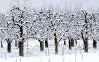 Можно ли обрезать деревья зимой