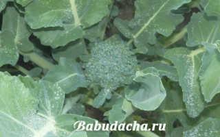 Брокколи цветет можно ли есть