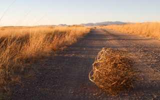 Как правильно виноград спел