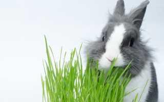 Можно ли давать кроликам базилик