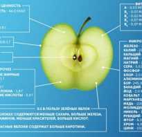 Можно ли морозить яблоки на зиму в домашних