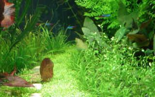 Как называется аквариум для растений