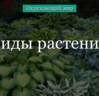 Какие бывают виды растений