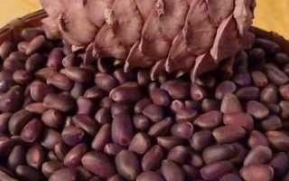 Как шелушат кедровые орехи