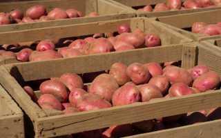 Чем обработать ящик для картошки в подвале